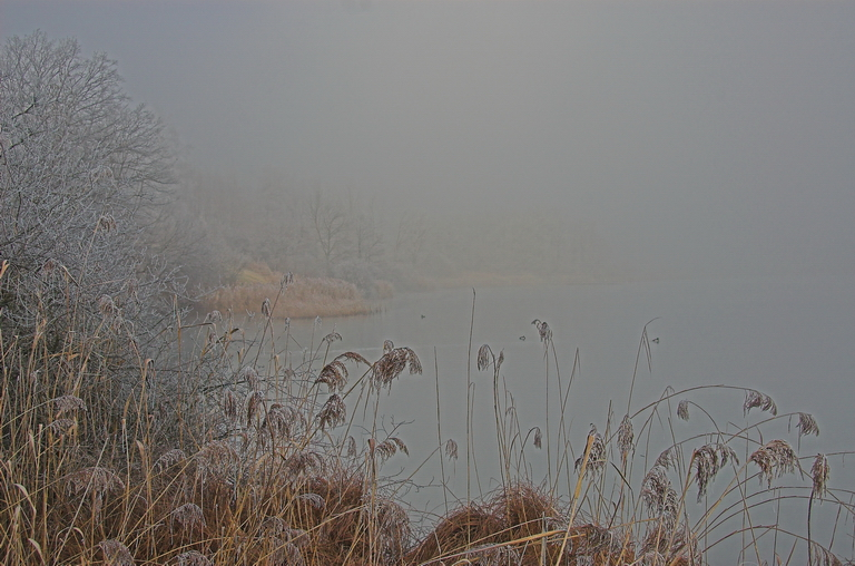 Tuerlersee im Nebel / Misty Lake of Tuerlen